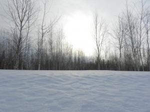 белое солнце зимы