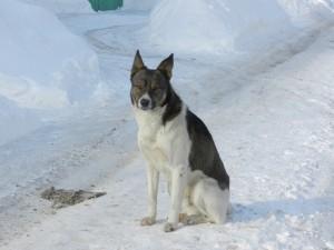 уличный пёс