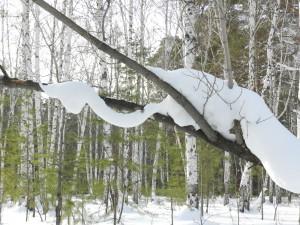 снежная змея