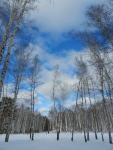 бездонное синее зимнее небо