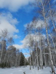 зимнее яркое небо