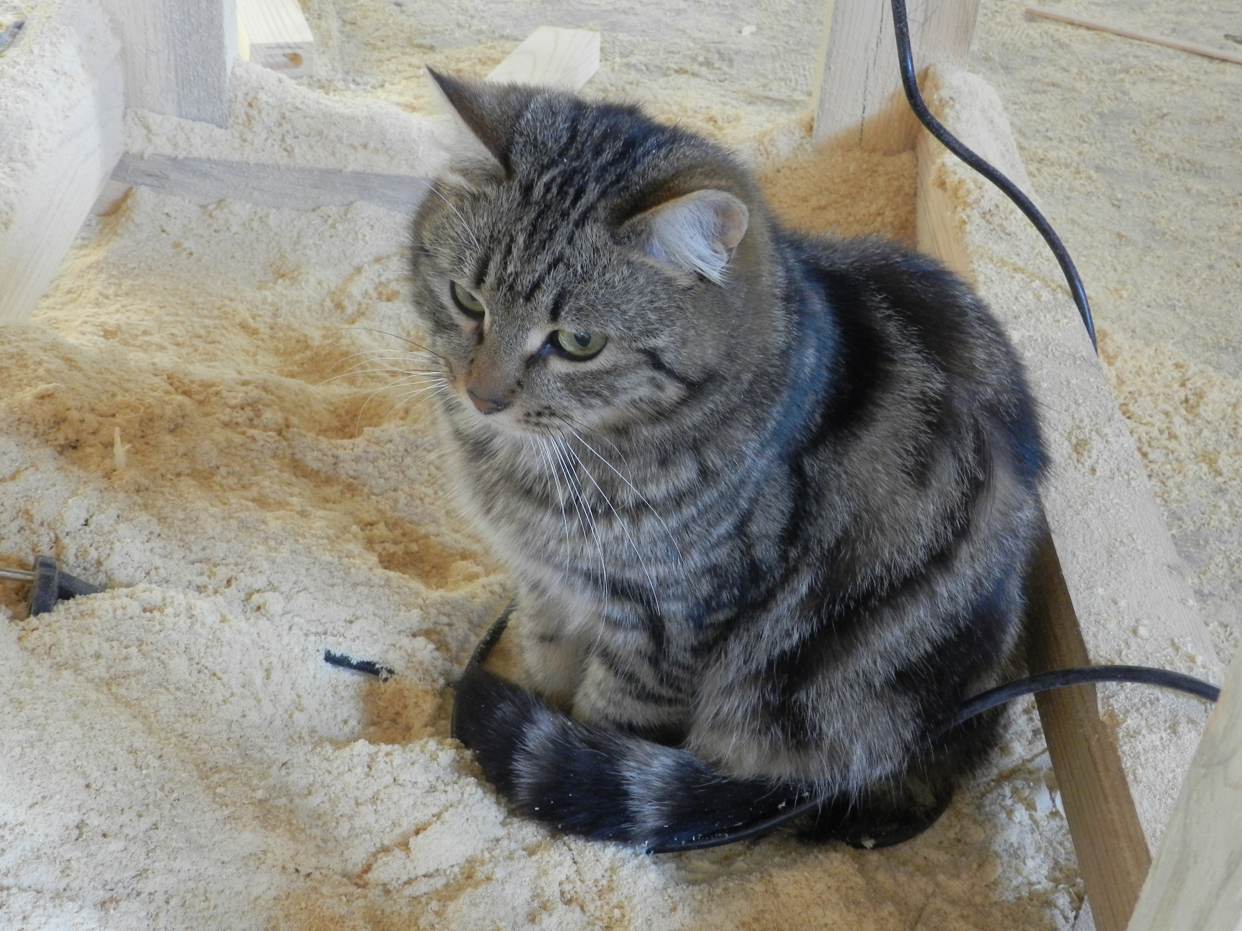 кот в опилках