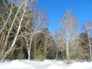 синее-синее небо зимой