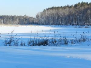 камыш у заснеженного озера