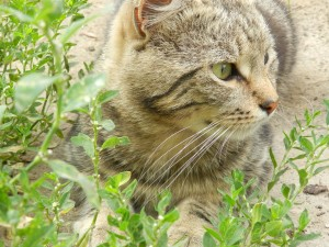 чу, что там за шум среди травы?