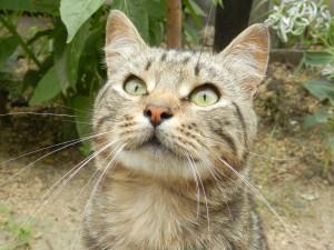 Иногда в зеленых глазах кота отражается голубое небо