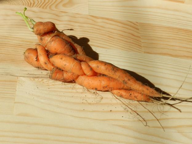 Овощная эротика