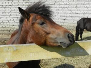 А пони - тоже кони!
