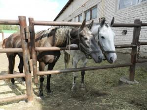 Кони на курганском ипподроме