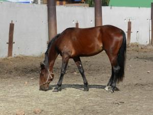 лошадь в леваде курганского ипподрома