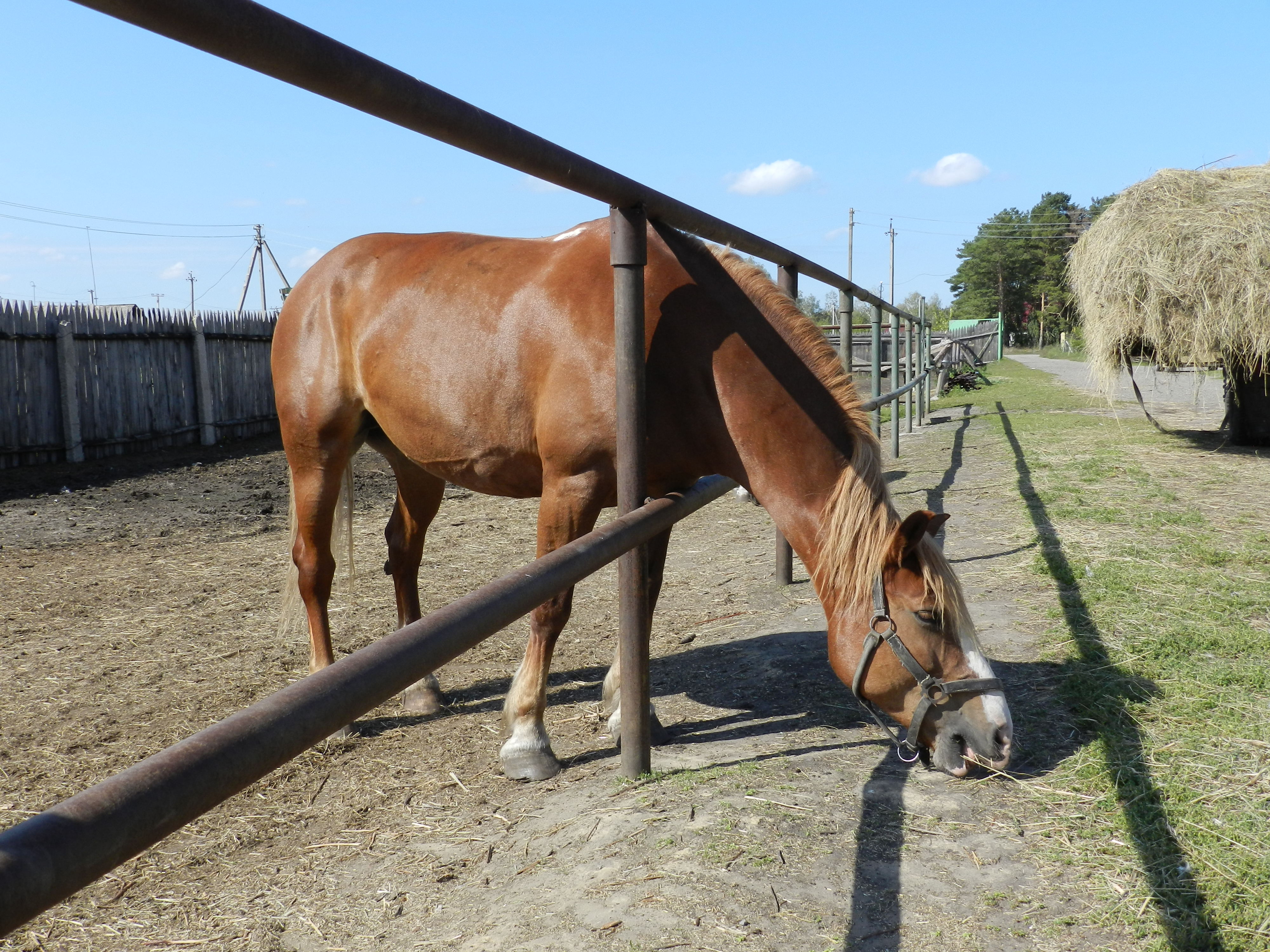 Лошадь на ранчо в Лукино